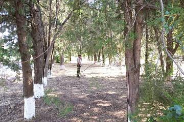 Дворники и садовники  группы хозяйственного обслуживания и благоустройство занимаются уборкой  нашего любимого города