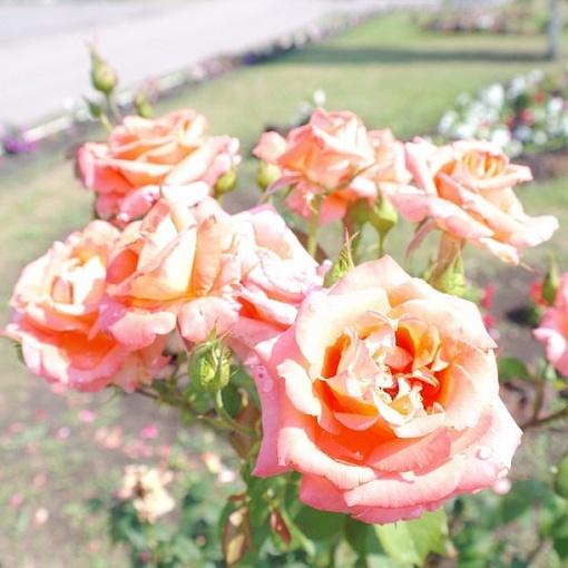 Цветы в центре с. Бугаевка