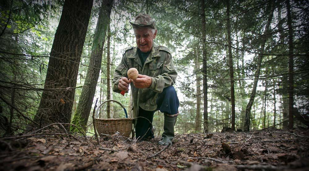 Памятка грибникам: как не заблудиться в лесу