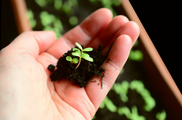 Дачные хитрости для садоводов и огородников