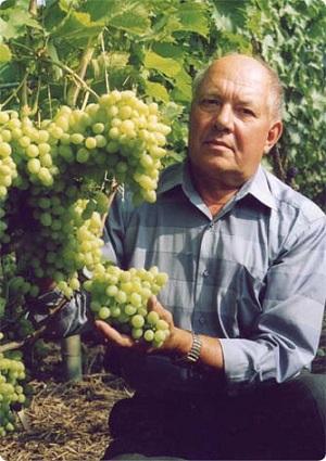 Виноградарь земли воронежской