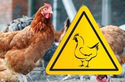Утверждены ветеринарные правила по гриппу птиц