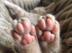 Мерзнут ли кошачью лапки?