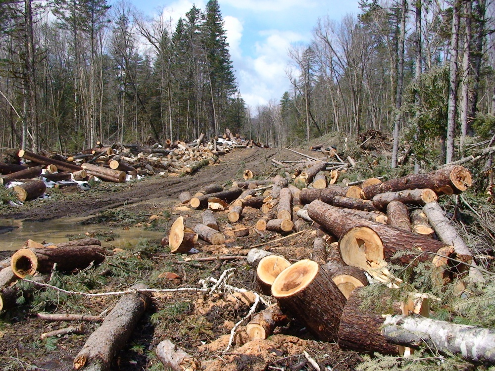 Памятка незаконная вырубка деревьев