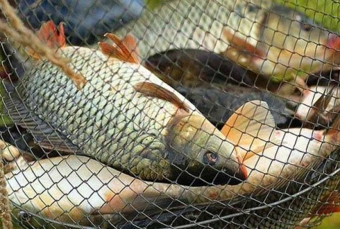 Обратите внимание на правила рыболовства!