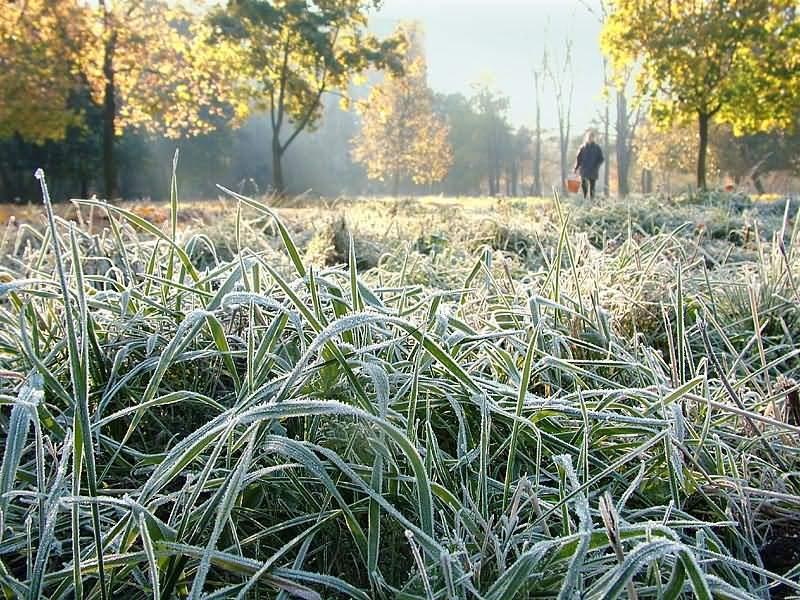 В ночные и утренние часы местами в крае ожидаются заморозки