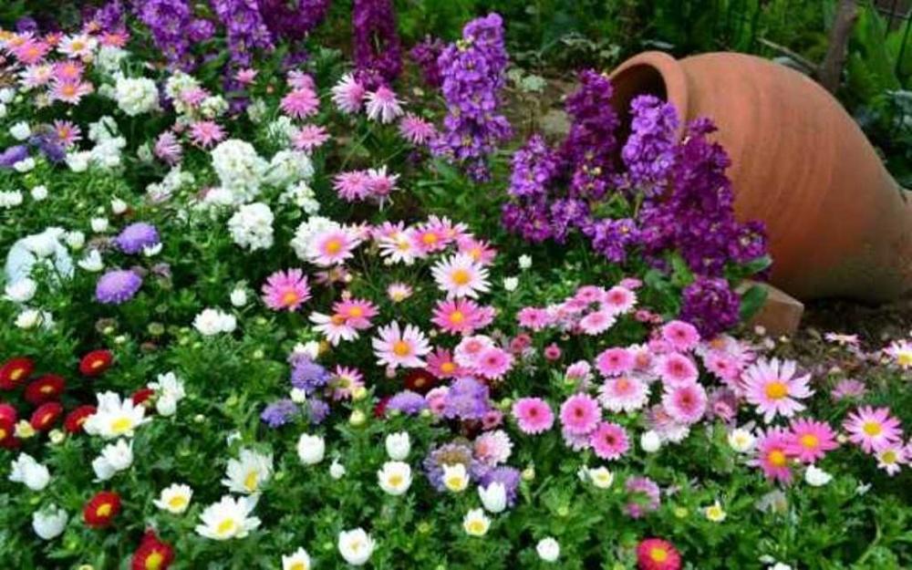 Фотоконкурс «Мои любимые цветы» .