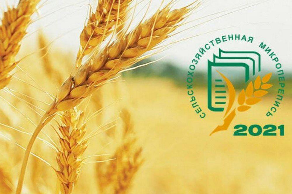 Информация о ходе сельскохозяйственной микропереписи на территории Кущевского района.
