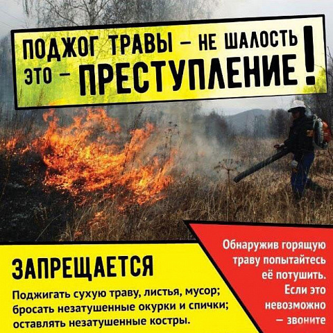 Вред, наносимый природе и человеку, от сжигания тростника.