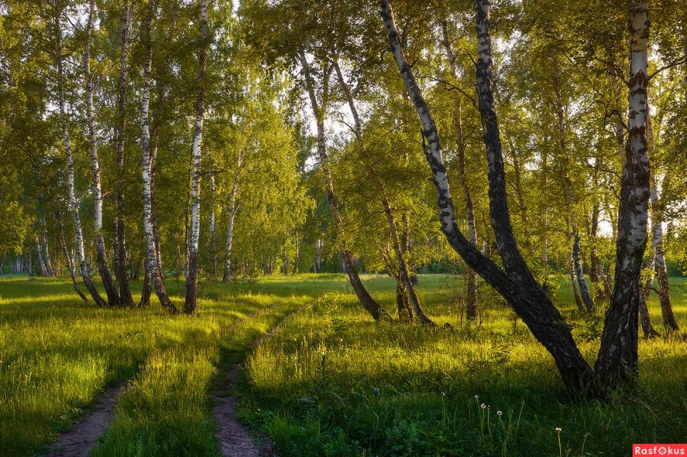 «Красота русских лесов»