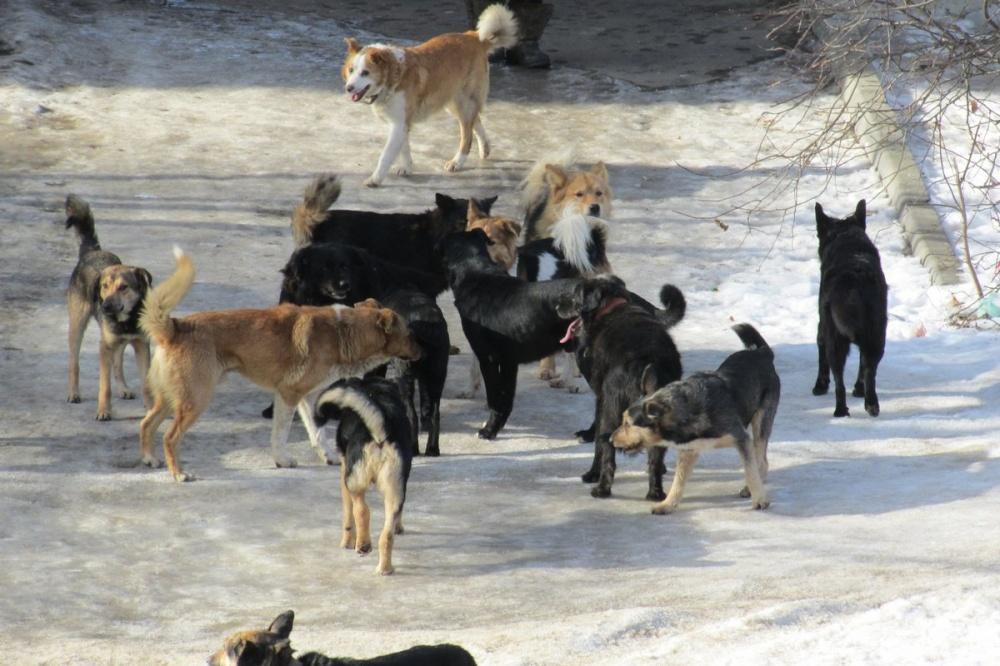 Собаки должны быть на привязи!