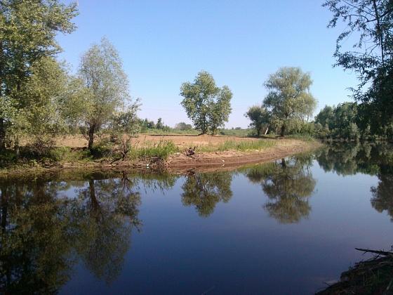 В волгоградском регионе экологи оценили заполняемость Волго-Ахтубинской поймы