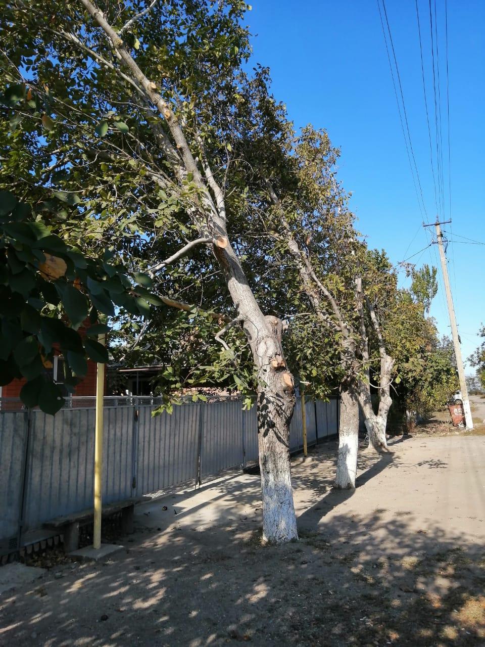 Обрезка кроны деревьев в с.Воронцовка спо пер.Чапаева сотрудниками Ейской службы спасения !