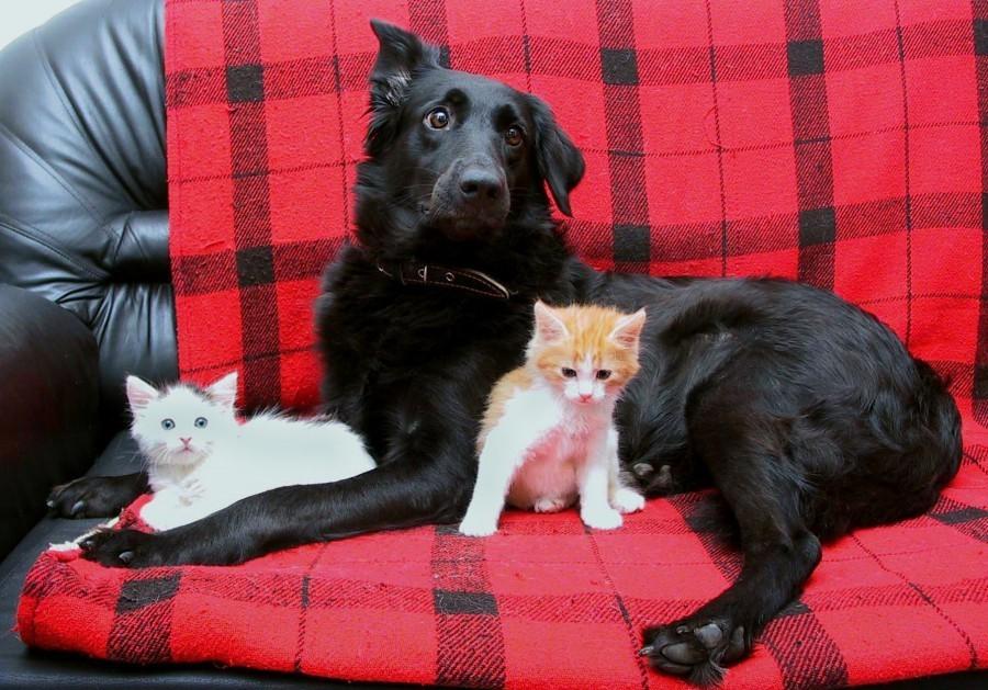 Памятка по содержанию домашних животных