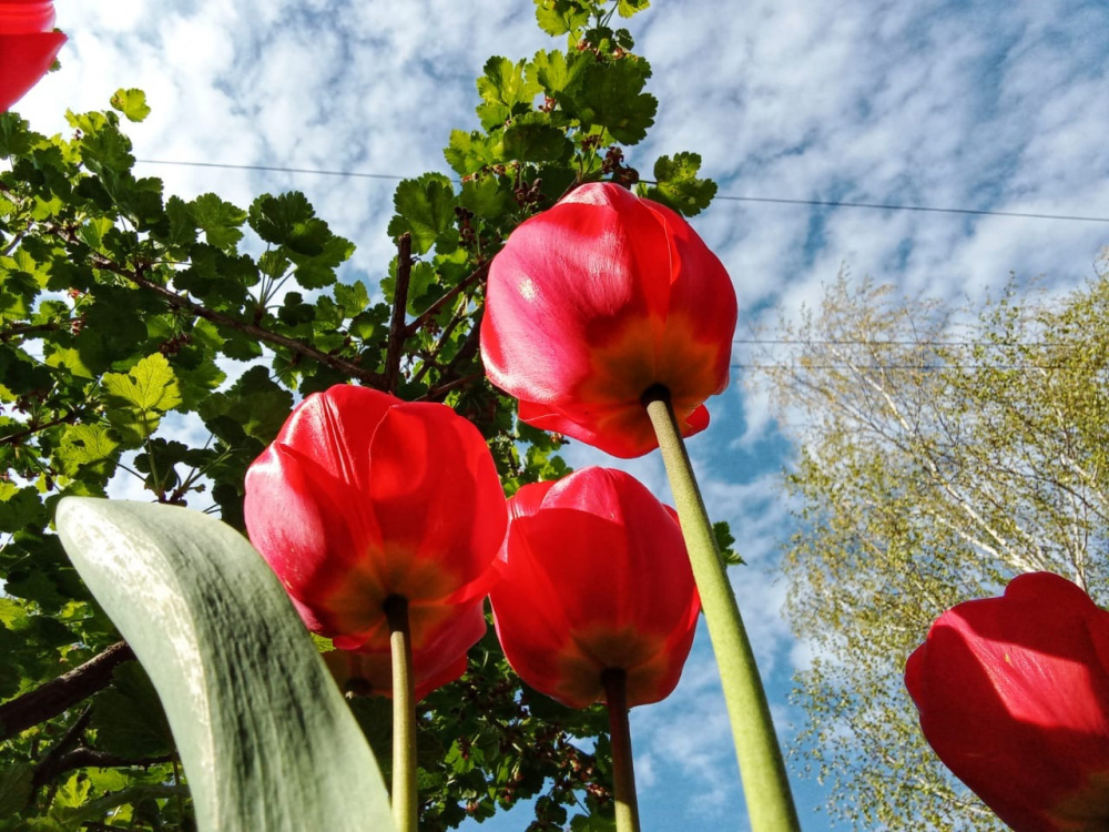 Цветущие первомайские дворы