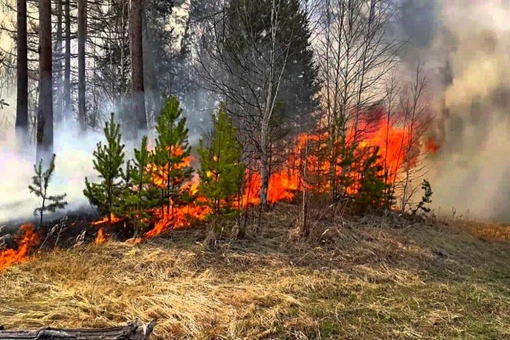 О введении режима ограниченного пребывания в лесах
