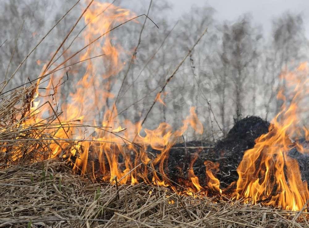 ПОСТАНОВЛЕНИЕ от  07 апреля 2021 г. № 166   Об установлении особого противопожарного режима на территории Воронежской области