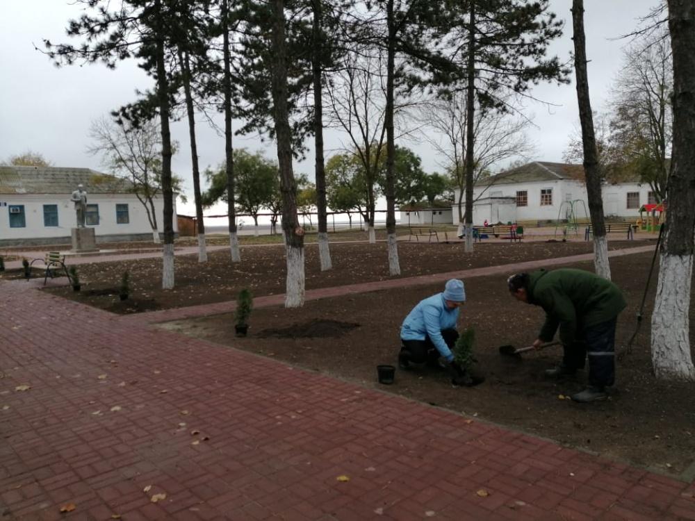 В сквере «Молодежный» высадили 20 кустарников можжевельника