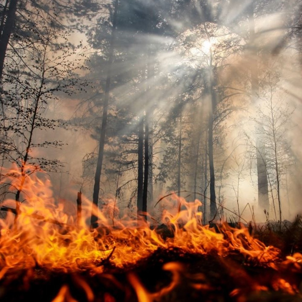 Риск природных пожаров