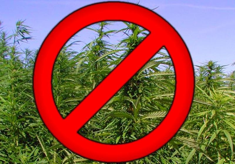 О необходимости уничтожения дикорастущей конопли и мерах ответственности за непринятие мер по уничтожению наркосодержащих растений  и их незаконного культивирования