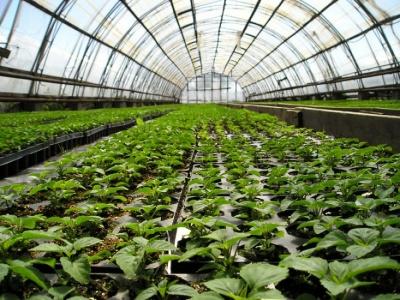 Выплата субсидий за производство реализуемой продукции животноводства и за строительство теплиц.