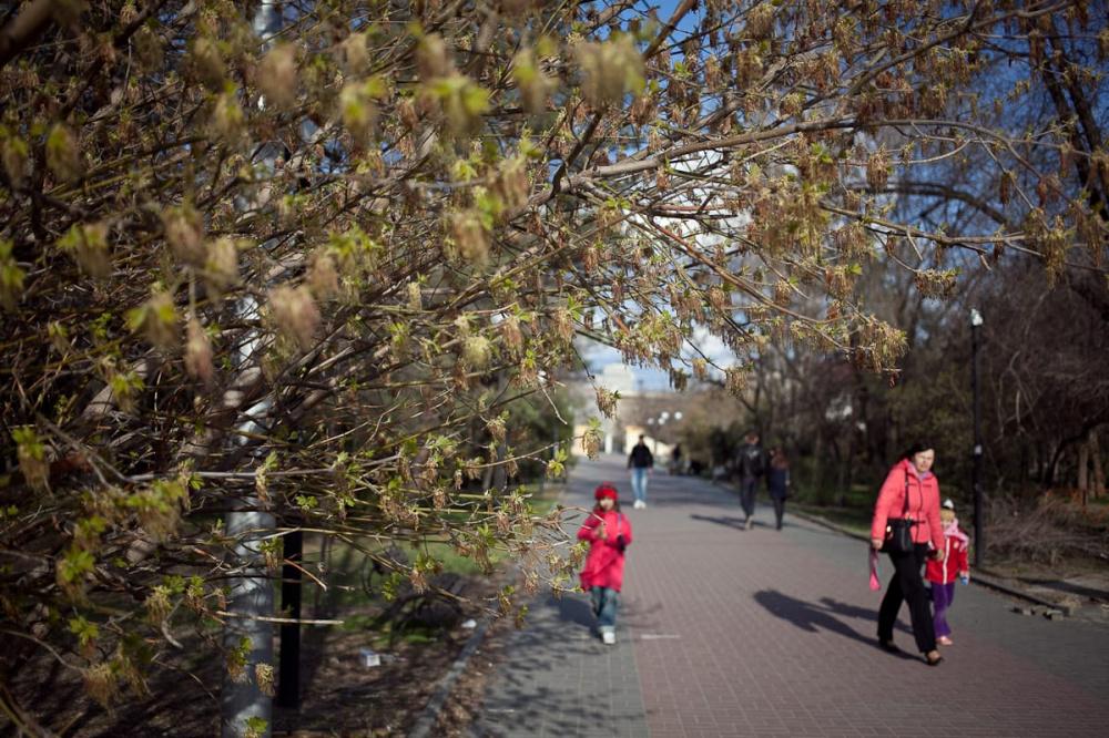 Жители Волгоградской области подают заявления на перерасчёт ежемесячных выплат на детей в возрасте от трёх до семи лет