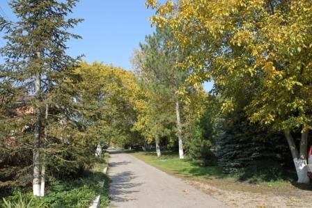 улица Гагарина осень