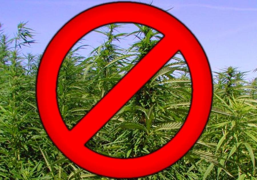 Ответственность за непринятие мер по уничтожению дикорастущих растений, включенных в перечень наркотических средств и дикорастущей конопли.
