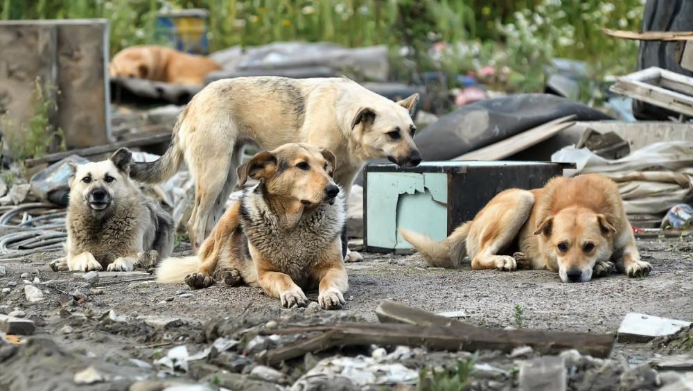 Информация о бродячих собаках!