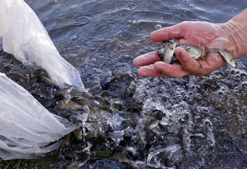 В законодательство о рыболовстве и сохранении водных биоресурсов внесены изменения, регулирующие порядок осуществления государственного надзора в данной сфере.