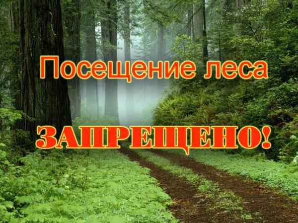 Запрет на посещение лесов!!