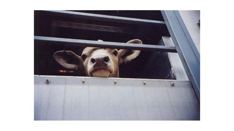 Перевозишь животное – согласуй маршрут!