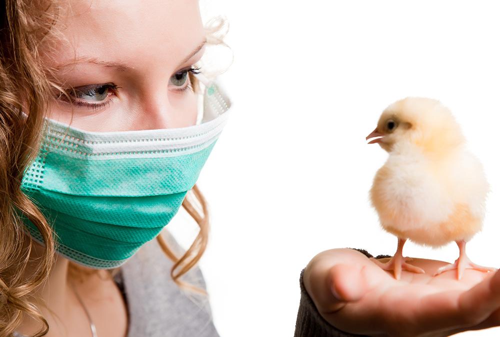 Грипп птиц: основная информация и памятка