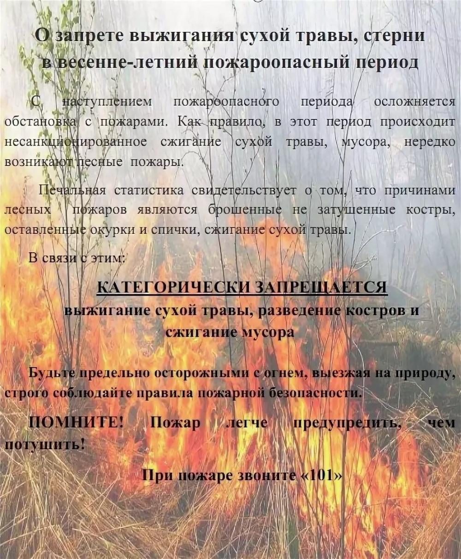 О запрете сжигания сорной растительности