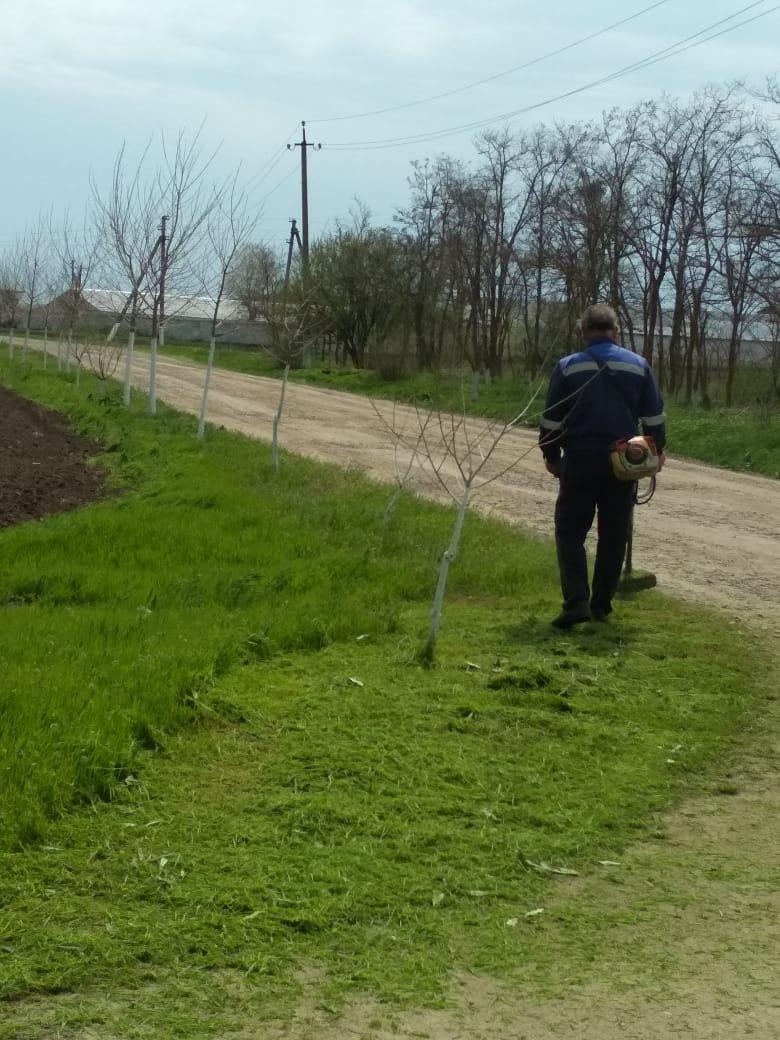 Продолжают работы по покосу травы и сорной растительности