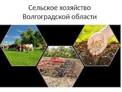 Комитет сельского хозяйства Волгоградской области (далее – комитет) о представлении субсидии на возмещение части затрат на приобретение элитных семян (далее – субсидия) в 2021 году