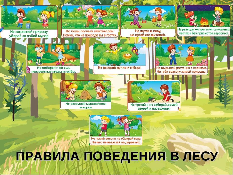 О Правилах поведения школьников в лесу