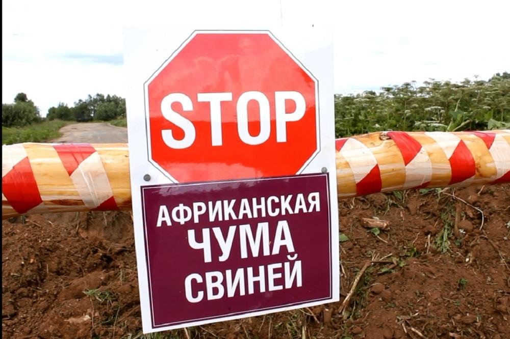 Ограничительные мероприятия(карантин) по африканской чуме свиней на территории сельского поселения Преполовенка