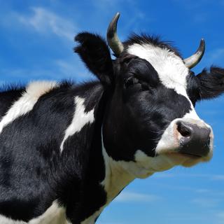 Начался приём документов на выплату субсидий, по затратам понесенным в четвертом квартале 2019 года, и в текущем финансовом году, гражданам ведущим  ЛПХ, КФХ, ИП   (молоко, мясо, теплицы)