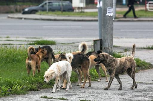 Объявление о сроках отлова бесхозных животных на территории Кущевского сельского поселения
