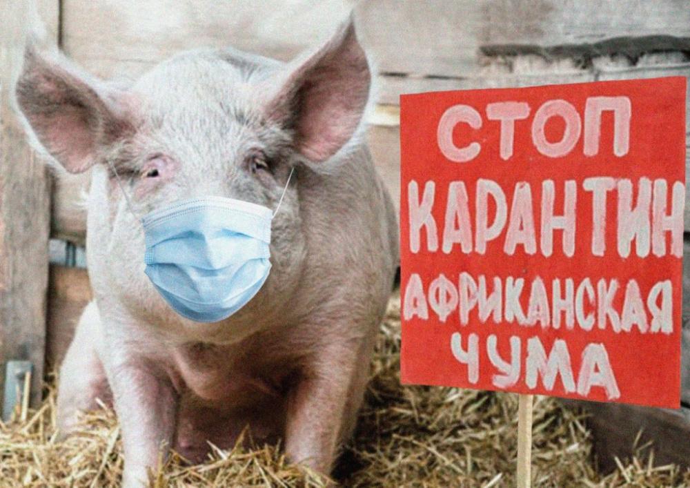 ПАМЯТКА для населения Африканская чума свиней