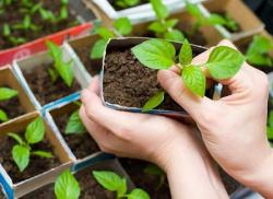 Как правильно выбрать семена на рассаду?