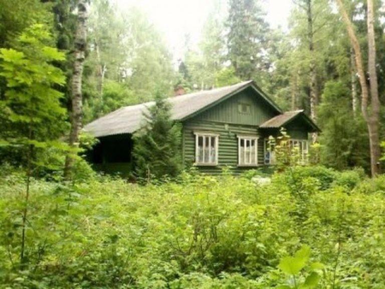 «Прямая» линия по вопросам «лесной амнистии»