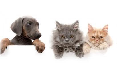 Обзор законодательства в области обращения с животными