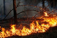 ПАМЯТКА по действиям при возникновении лесного пожара