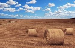 За работу в сельском хозяйстве положена доплата к пенсии