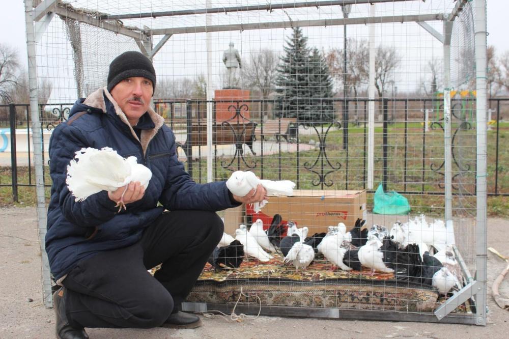 В поселении состоялась выставка-ярмарка голубей