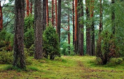 Может ли быть запрещено или ограничено пребывание граждан в лесах?
