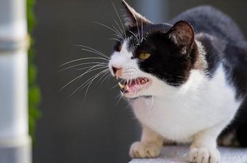 Ветеринарная служба Советского района информирует На территории Оричевского района Кировской области случай бешенства у кошки