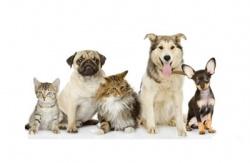 Вопросы в области обращения с животными